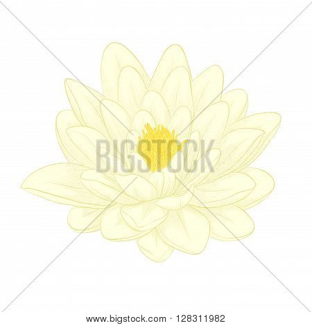Beautiful lotus flower painted in graphic style isolated on white background