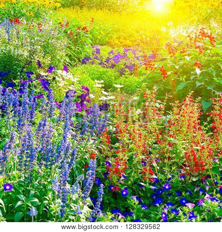 Colorful flower bed illuminated by sunlight