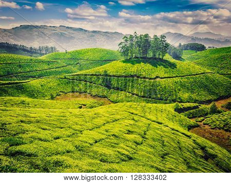 Vintage retro effect filtered hipster style image of green tea plantations. Munnar, Kerala, India