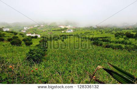 Farmland In Brava
