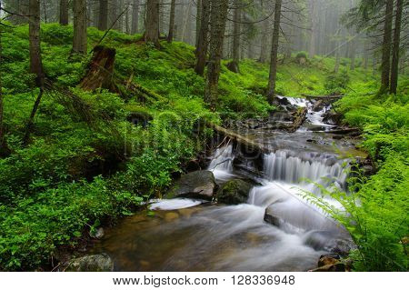 Creek in the woods and trees in the fog