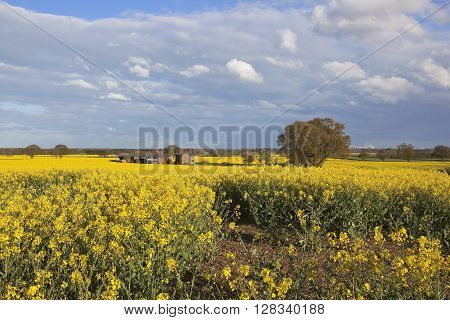 a scenic farm complex surrounded by yellow flowering canola crops with a power station in the background under a blue cloudy sky in may
