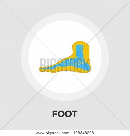 Foot anatomy icon vector. Flat icon isolated on the white background. Editable EPS file. Vector illustration.