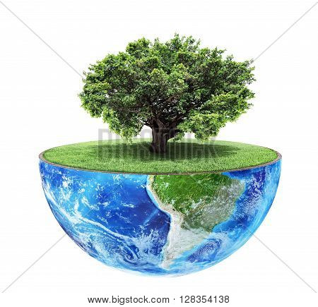 Eco concept. Big tree on the half of planet with green grass on a white background. Concept of consciousness.