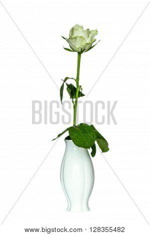 One Rose  In Vase