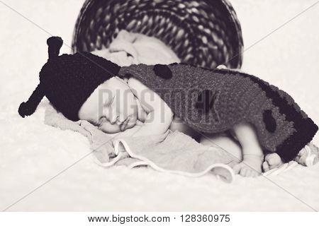 sweet sleeping newborn is wearing ladybug costume