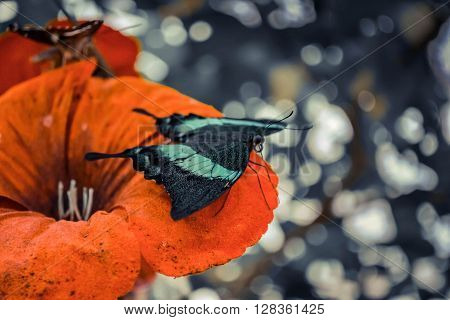 butterfly with green wings sitting on a red flower close-up filter