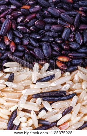Wild Gold And Red Dry Rice Closeup
