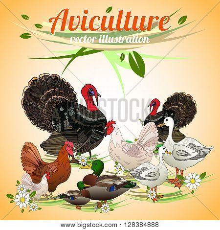 Birds set. Set of poultry. Aviculture. Vector illustration.