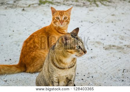 two cats on the sand maldivian beach