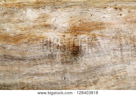 Wood texture of dry wood freed from the crust.