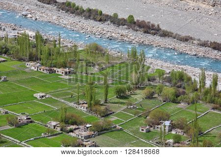 Himalayan oasis – gardens with apricot trees and poplars among barley fields in Turtuk village, Ladakh, Jammu & Kashmir, India