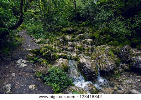 rapid stream with rocks and moss in Abkhazia