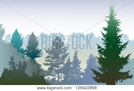 Panoramic winter forest landscape with silhouettes of plants and evergreen trees