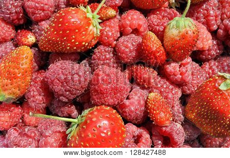 close-up of the fresh wild strawberries and raspberry after the picking