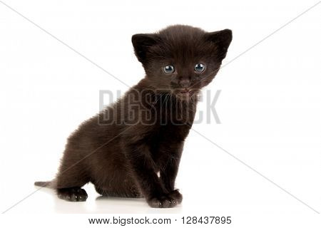 Small black kitten isolated on a white background