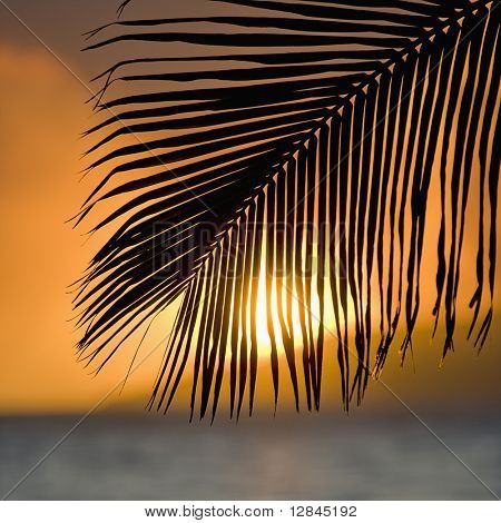 Palm frond at sunset over ocean and Maui, Hawaii.