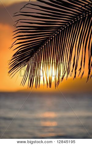 Sunset over ocean with palm frond silhouette at Maui, Hawaii.