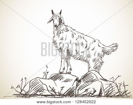 Sketch of goat standing on rock. Hand drawn illustration. Isolated