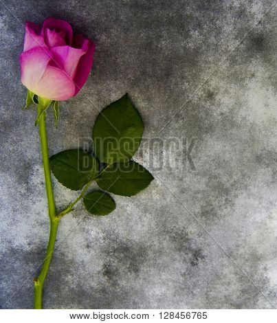Violet Rose on marble background - condolence card