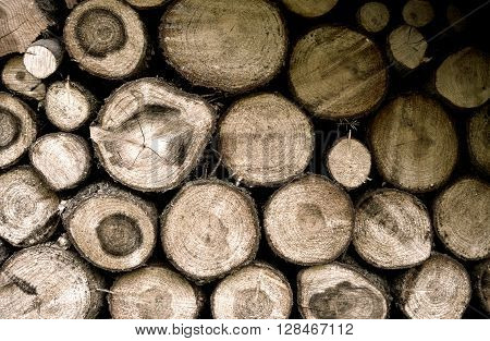 mound of wood, lumber, timber from mountain forest