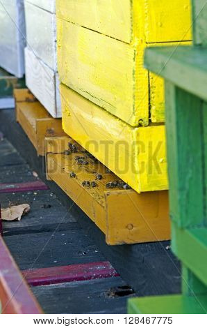 Bees swarming in front of the yellow hive closeup