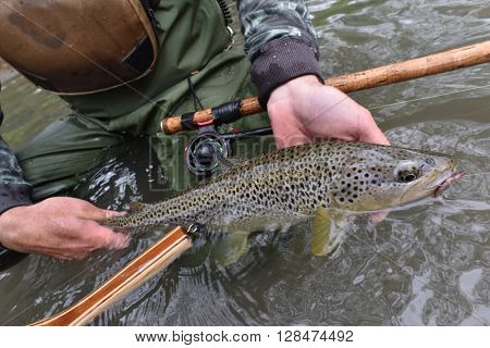 Fly-fisherman holding fario trout caught in river