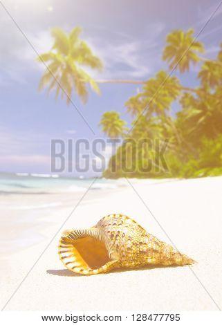 Shell on tropical beach.