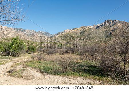 Landscape view of Arizona's Catalina State Park