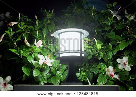 Small Garden Lamp surrounded white flowers and green leaves at night.