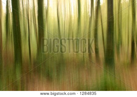 Abstract Forestry Blurred Background