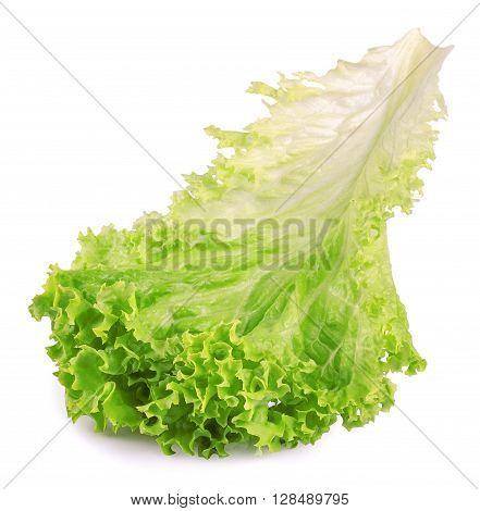 Salad leaf. Fresh lettuce one leaf isolated on white background close-up. Green vegetable lettuce