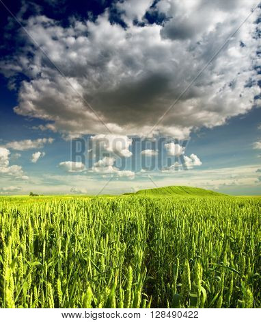 Green Wheat field and dramatic clouds