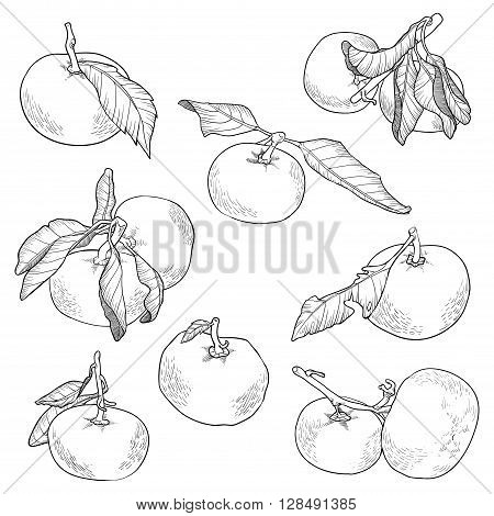 Vector Black And White Set Of Orange Fruits