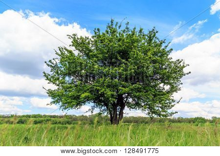 Green tree on meadow with grass