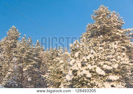 White Fairytale Frosty Glow