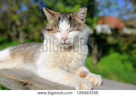 Funny cat sleeping outdoors at nice sunny day