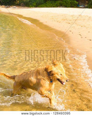 Running dog on the beach