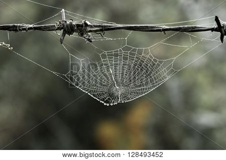 Cobweb with small dews during fog in the morning
