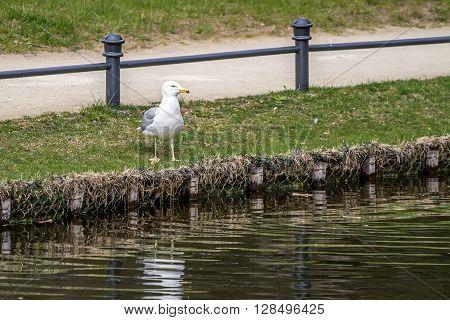 Gull Onshore