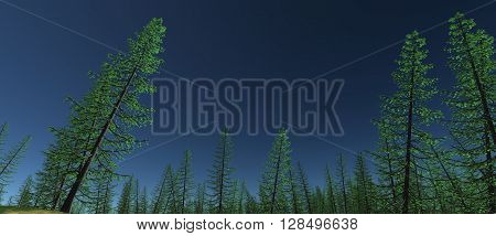 views of the tops of green spruce trees with blue sky. Daytime. 3D rendering, 3D illustration