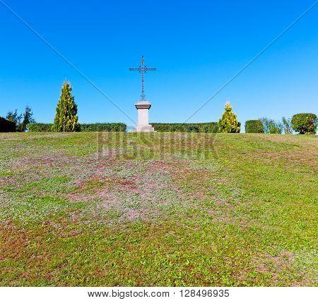 Grass   Abstract Sacred  Tree