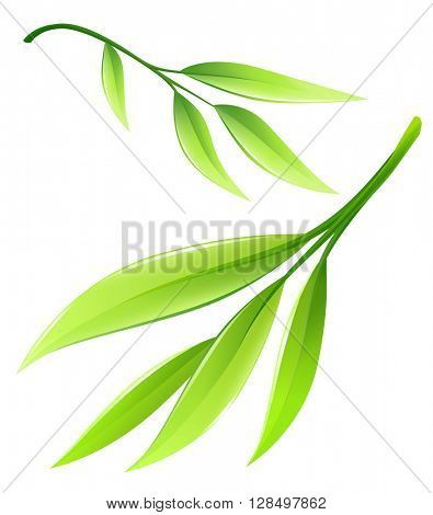 Branch with green bamboo leaves. Vector illustration isolated on white background