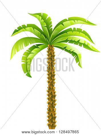 Tropical coconut palm tree with green leaves vector illustration. Isolated on white background