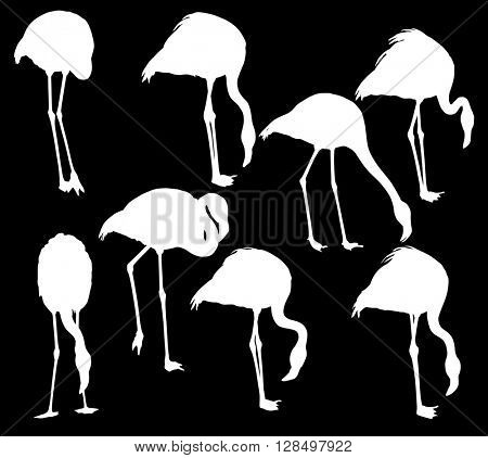 illustration with set of flamingo silhouettes isolated on black background