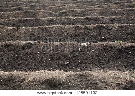 Cultivated field with empty furrows of peat ready for seasonal spring planting