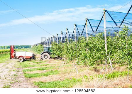 Agricultural work. Treatment pesticide to fruit trees