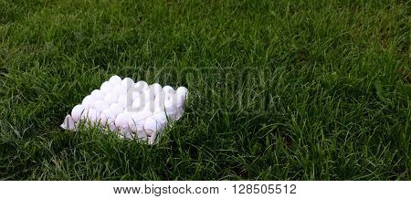 Picture of an Eggs on a green grass