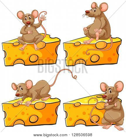 Four poses of mouse and cheese illustration