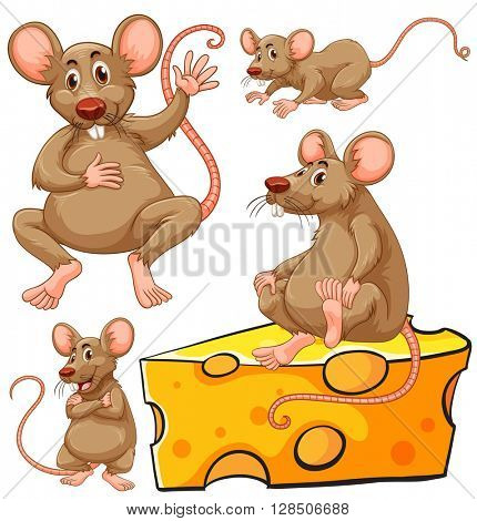 Brown mouse and cheese slice illustration